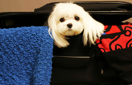 Why Consider Hiring an Animal Travel Company When Moving