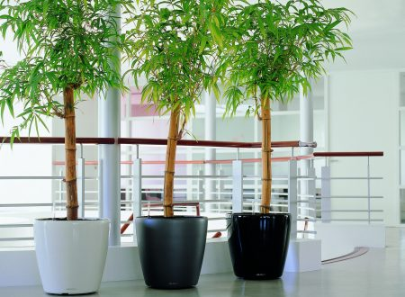 Balcony Gardening: Add Greenery to Your Urban Apartmant