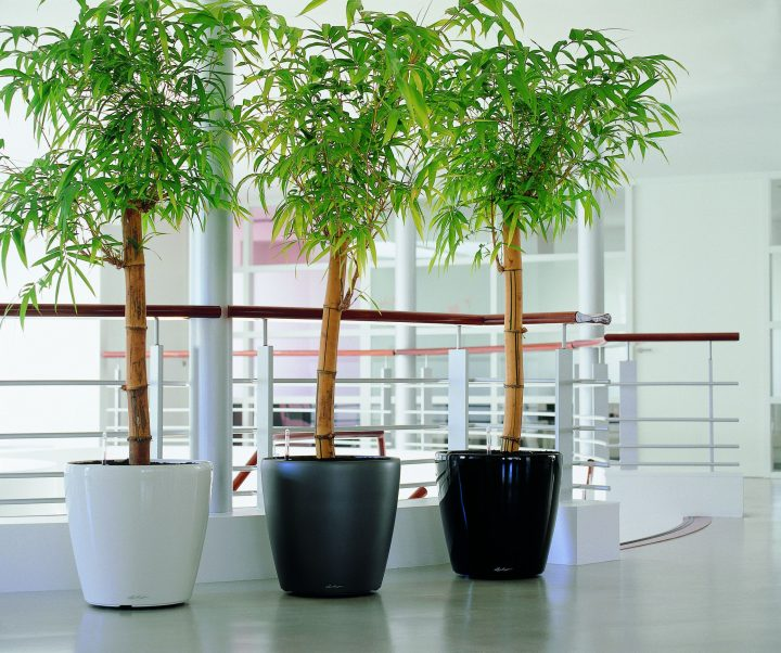 white self watering planters