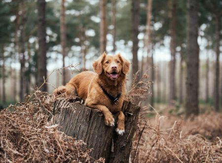 Dog Deterrents: The Tools to Repel and Train Dogs