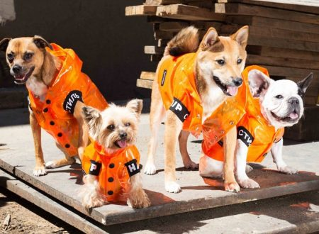 What Are the Benefits of Dog Clothing?